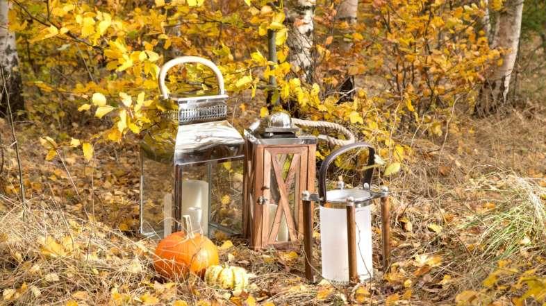 Bunter Blätterrausch – Spaziergang im herbstlichen Wald